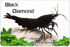 Креветка Black Diamond