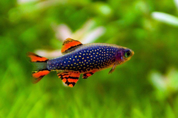 галактика рыбка фото