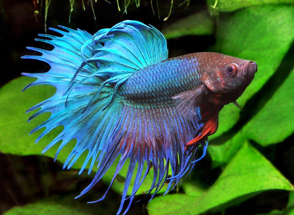 how to tell if your betta fish is unhappy
