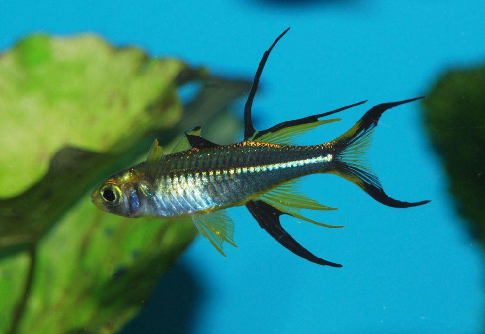 рыбка разбора фото